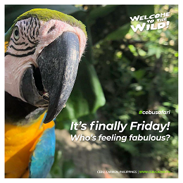 Cebu Safari finally Friday post-social media design with a focused bird in the forest