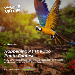 Cebu Safari photo contest invitation with a beautiful bird social media design