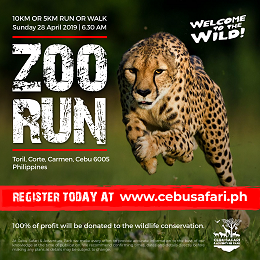 Cebu Safari social media design with a running cheetah in the field for fundraising information