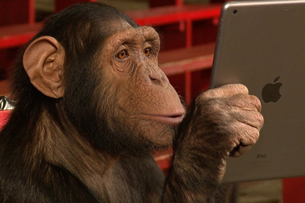 A monkey using a tablet